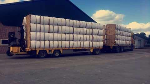 Grote balen gehakseld stro ( ca 150 kg )